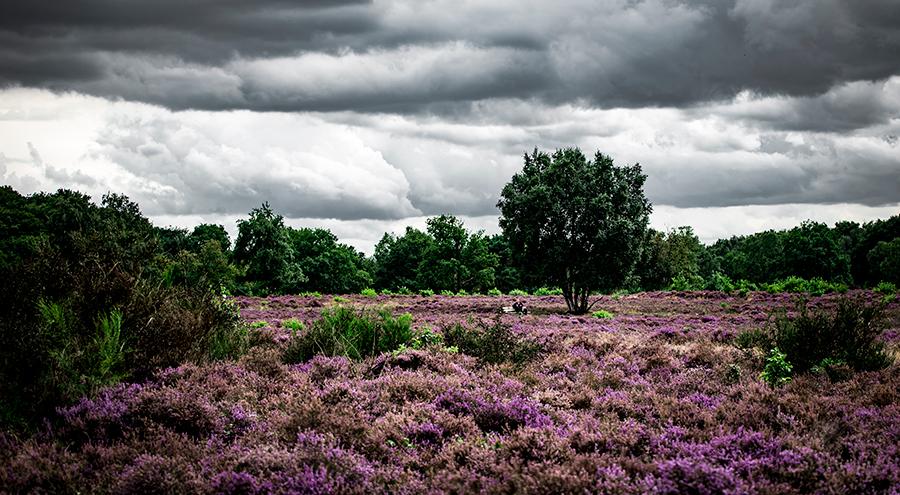 Glooiend Centraal Nederland